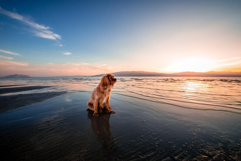 plage acceptant les chiens